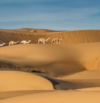 الصحراء 2