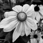 Flower-BW