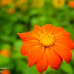 Flower-red2