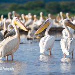 lake-blog24